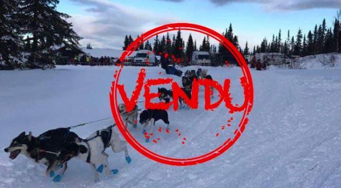 Chiens Alaskan à vendre par Antoine Sement