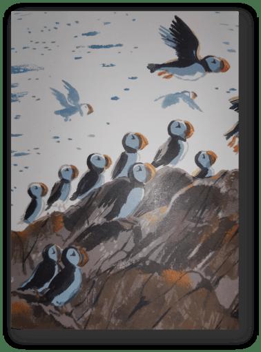 les macareux du phare aux oiseaux