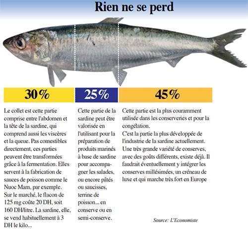 sardine_4820.jpg