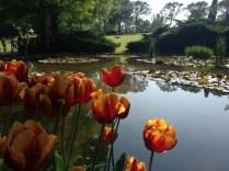tulipanomania parco sigurtà