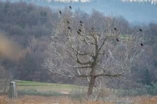 Riserva-Naturale-delle-Torbiere-del-Sebino-ARicchiniPh (6)