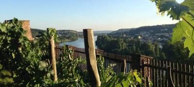Terre da vino: Praga, la città del vino