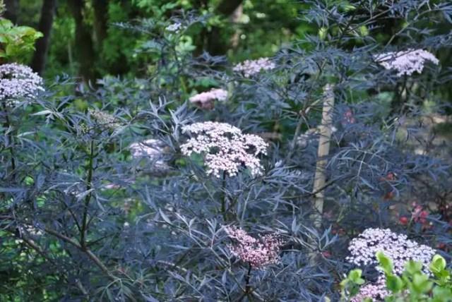 Heller Garden - fiori