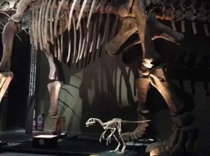 dinosauri-giganti-dall-argentina-mudec-10
