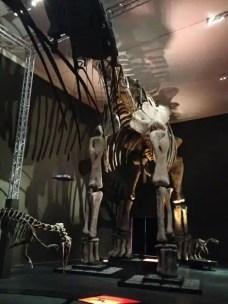 dinosauri-giganti-dall-argentina-mudec-6