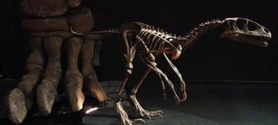 MUDEC: Dinosauri dall'Argentina in mostra in Zona Tortona