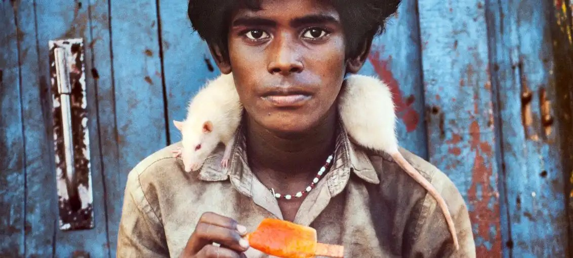 Steve McCurry ANIMALS