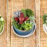 Le Creuset Diy With Le Creuset Make Your Own Succulent Hot Pot