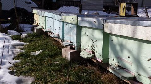 apicultura din romania