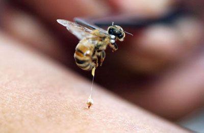 lectii apicultura