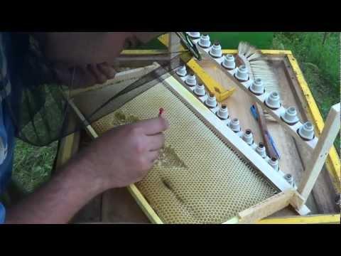 cresterea matcilor