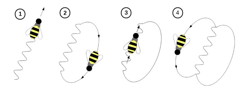 psihologia albinelor