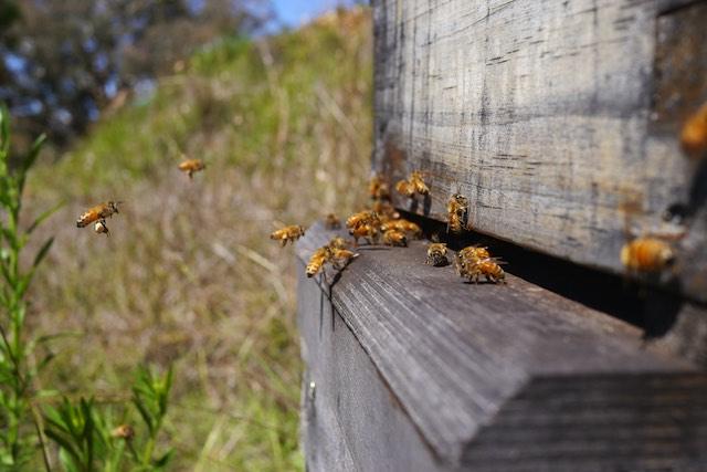 apicultura in pastoral, lectii de apicultura