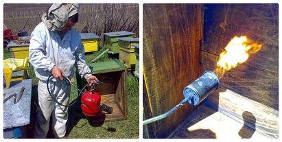 dezinfectia si igeiena in apicultura