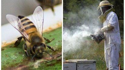 lucrari apicole in lunile august-septembrie