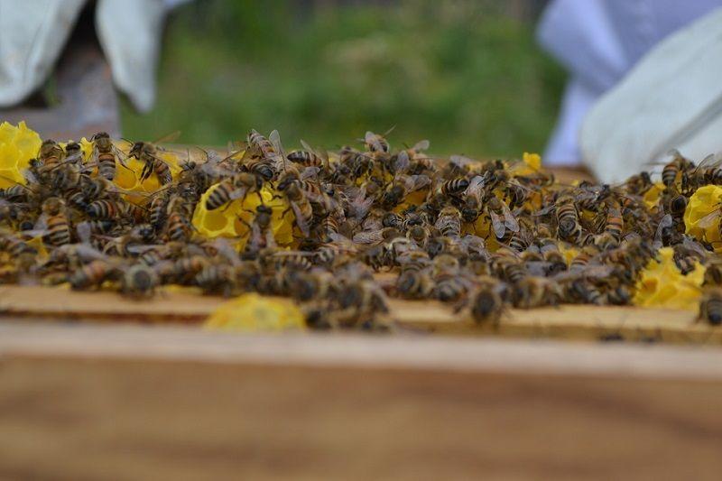 pesticidele care omoara albinele