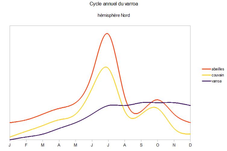 ciclu varroa anual