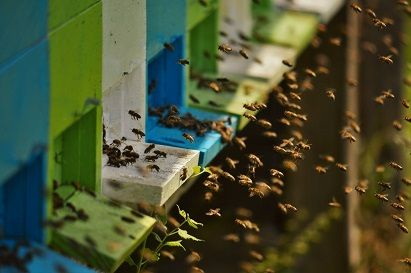 microclimatul albinelor