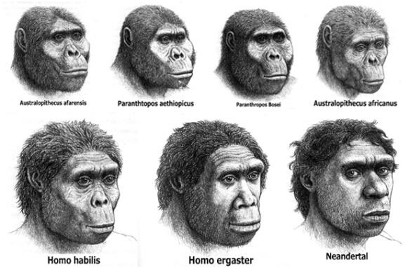 Ancestros humanos y el género Homo