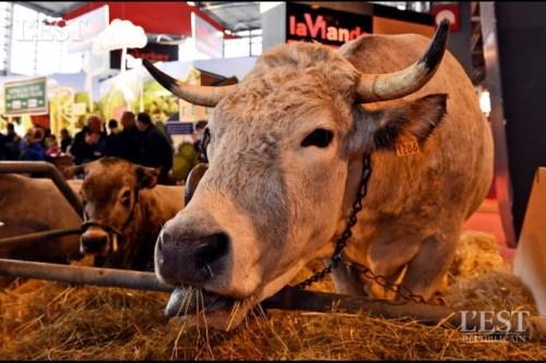 Le monde paysan va t il définitivement disparaître en France ?