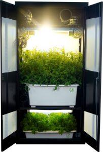 cultiver en interieur dans une armoire hydroponique offre de multiples avantages et une solution toute en un entierement equipee pour un debutant et novice