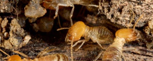 Attic Pest Control