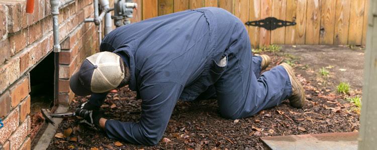 Preventive Pest Control
