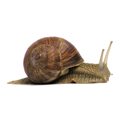 Snail Pest Control