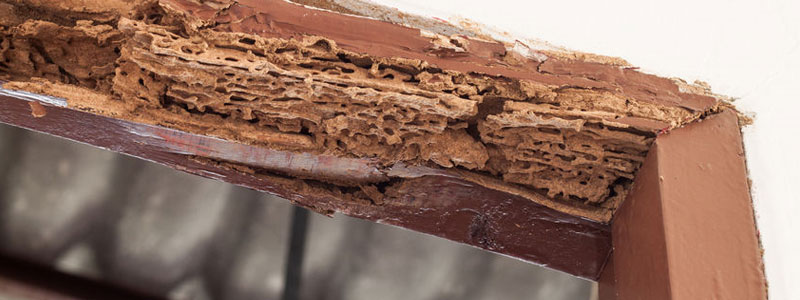 Common Signs Your Building Has Termites