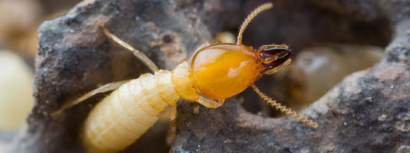 Commercial Termite Treatment