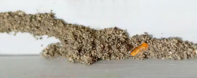 Professional Termite Exterminator in Charleston