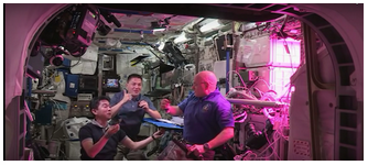 Image of astronauts aboard the International Space Station (ISS) tasting lettuce grown in microgravity on the ISS