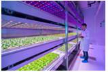 Image inside one of the indoor grow rooms at the Philips Research Centre in the Netherlands