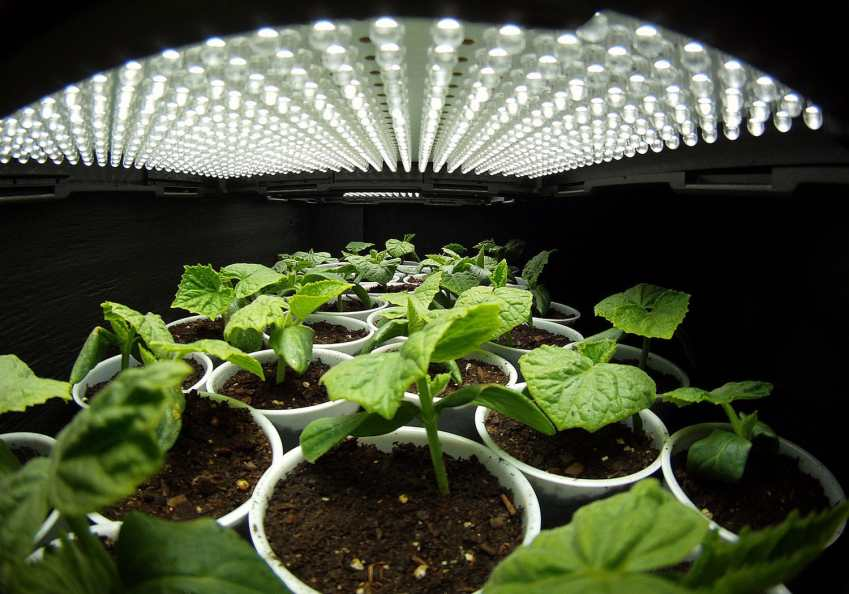 top led grow lights 2016
