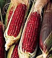 Red Ear Of Corn