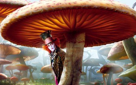 Murder solved by a mushroom