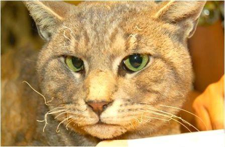 Cat's DNA solves cases