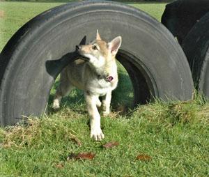 Inara, pup van Leslie