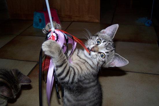 kattenhengel