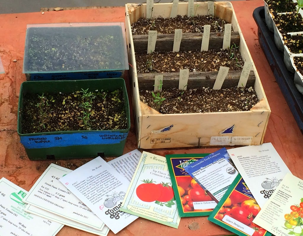 Graft, The Good Kind & Tomatoes Galore