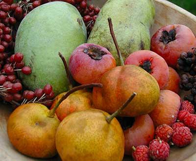 autumn uncommon fruit