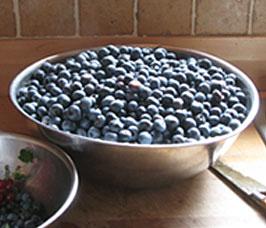Bowl of blueberrires