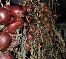 Stored onions, in basement