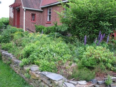 Heath bed in June