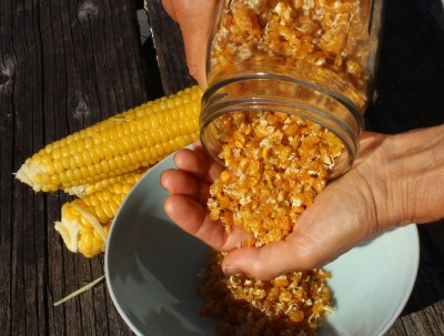 Dried sweet corn, for storage all winter.
