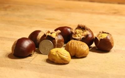 Marigoule chestnuts