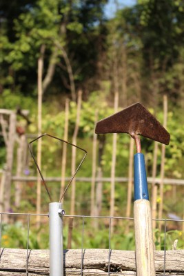Wire weeder and winged weeder