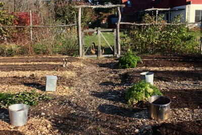 Vegetable beds in autumn