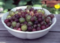 A bowl of fresh gooseberries