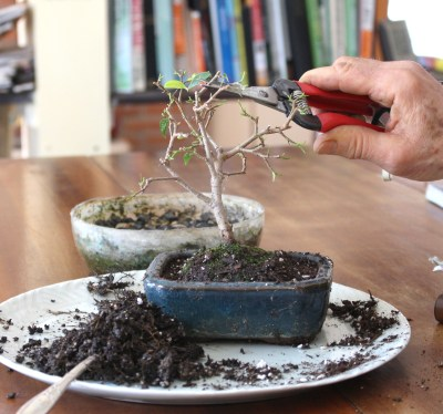Bonsai stem pruning